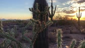 кактусы : Scottsdale Arizona desert sunset