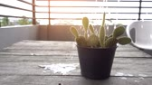 Watering small cactus on wood table slow motion