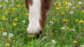 horse grazing in the meadow, close up