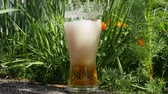 liquid light : glass of blonde beer in nature Stock Footage