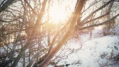 suécia : Sunlight shining through the branches of a tree in a park meadow on a snowy winter day in slow motion.