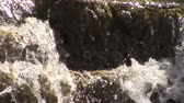 çağlayan : Water splashing on the rocks and cascading down. Stok Video