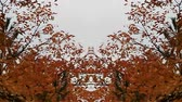fall foliage leaves tremble in the wind, mute, mirror effect added Stock Footage