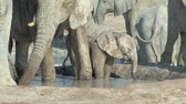 vegetação : Herd of Elephants with young in Etosha National Park, Namibia