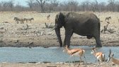 afrika : Bull Elephant splashing in waterhole during the dry season in Etosha National Park, Namibia, Africa Dostupné videozáznamy