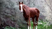 horse face : brown wild horse in nature