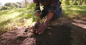 holding : Hands full of fresh soil to plant a new sapling