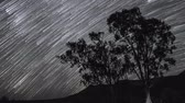 silueta : Night sky timelapse of star trail with silhouette trees in the foreground,
