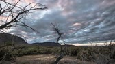 vegetação : Desert trees with cloudy sky timelapse Vídeos