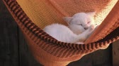 hamak : White cat rest is basking in an orange hammock. Cat washes