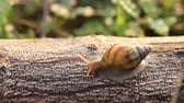 caracol : Snail crawl on the wood.
