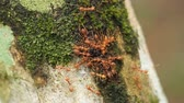 Red ant working