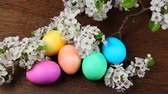 fundo colorido : Easter eggs on a flowering tree branch