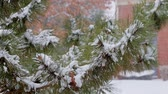 parte : Pine christmas tree winter branch in snow