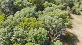 Beautiful garden or park with trees aerial view of spectacular Stockvideo