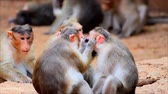 equador : The monkeys are looking for insects for each other