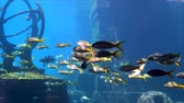black sea turtle : Fish swimming in the Ruins in the aquarium Stock Footage