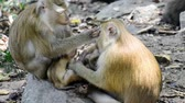 wild : Monkey family in fores Stock Footage