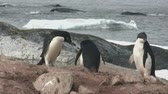 antarktida : Adelie Penguin who feeds him on the ocean on the Antarctic Island Dostupné videozáznamy