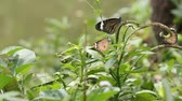calm : butterfly and flower in the nature Stock Footage