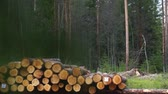Slowly focusing on heap of logs ready for transport