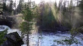 Scandinavian powerful river with sunbeams refracted in mist and pine tres in foreground Stok Video