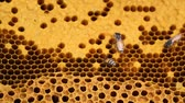 bees work on honeycomb Stok Video