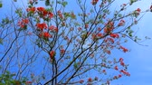 haulm : Red flower on the tree with blue sky Stock Footage