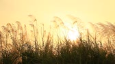 funda : Grass field at sunset Stok Video