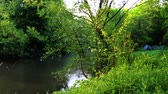small still river in the forest Stock Footage