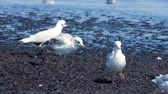 gulls at the sea