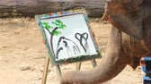 matky : LAMPANG, THAILAND - April 13, 2017 :-  Elephant painting in picture tree frame  at The Thai Elephant Conservation Center (TECC), Mahouts show how to train elephant in forestry industry Dostupné videozáznamy