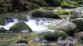 dumanlı : Waters Of Roaring Fork Motor Trail In The Smoky Mountains Stok Video