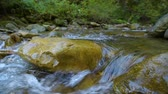 river rapids : Forest Mountain River Stock Footage