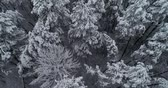 harikalar diyarı : Aerial view. Frozen forest. Misty day. Trees are covered with snow. 50fps, 4K.