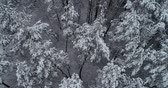 helicopter view : Aerial view. Frozen forest. Misty day. Trees are covered with snow. 50fps, 4K.