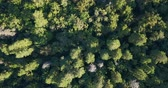 Aerial drone shot over the north european forest. Shot in 4K Stock Footage