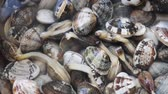 dýchání : A lot of living clams