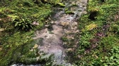 sauvage : close up shot of a small stream that flows next to the flowering grass, water moistens the soil and plant roots bloom brighter Vidéos Libres De Droits