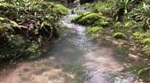 sauvage : Close up shot of a small waterfall in mountains deep in forest. Calm stream of crystal clear water in river. Beautiful view on nature. Vidéos Libres De Droits