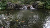 landscaping : Artificial pond with fish and waterfall Stock Footage