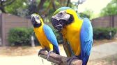 calçada : Parrots Ara eat nuts sitting on a rack stand