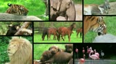kolaj : Wildlife montage of beautiful animals in the wild and in captivity.