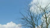 кичливый : Time lapse of clouds rolling past dead tree through bright blue sky.