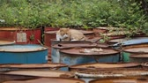 яд : The cat lies on old rusty barrels