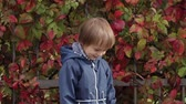 oynak : Little boy holds yellow autumn leaves in his hands and throws them up