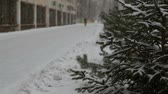 снегопад : Fir-tree near road and building Стоковые видеозаписи