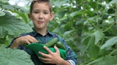 огурцы : Cute little boy with heap of cucumbers eating one in the greenhouse