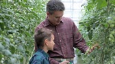 cultivado : Father showing his son how to cut tomatoes in the greenhouse