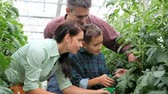cultivado : Happy family taking care of tomato plants in the greenhouse Vídeos